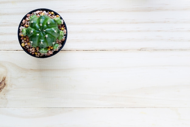 Cactus with space in pot on wooden table.top view