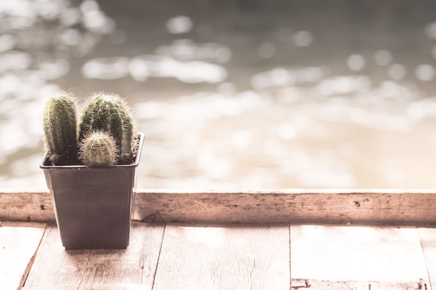 Cactus on wooden table river lake background holiday home concept relax