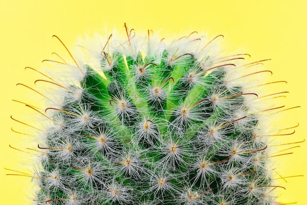 Cactus on a yellow background.