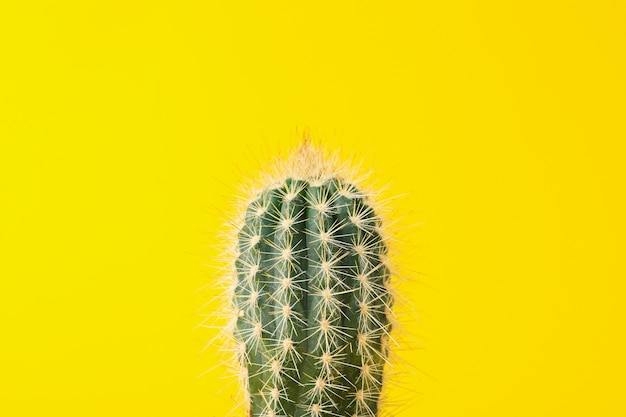 Cactus on yellow surface