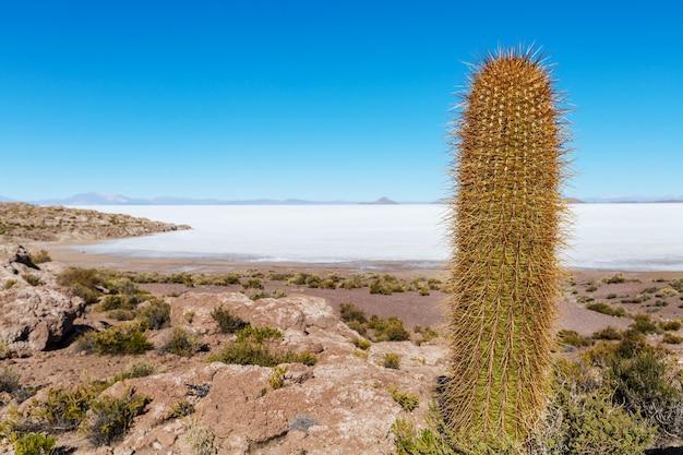 ボリビアのアルティプラノのサボテン。珍しい自然の風景は太陽の旅を捨てた南アメリカ