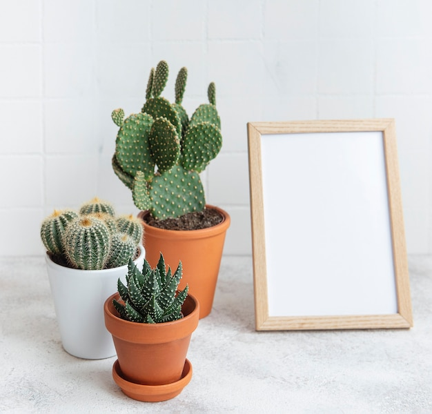 Cactuses and succulent plant in  pots  and mock up poster frame on the table