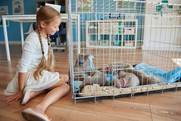 Cage full of dog puppies