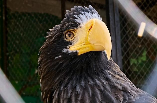 動物園のcageの中の大きなワシ