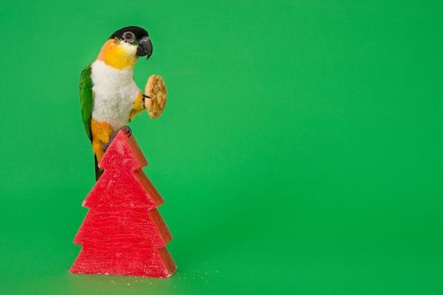 赤いクリスマスキャンドルの上に座って、クリスマスアーモンドクッキーを保持しているカイク鳥。