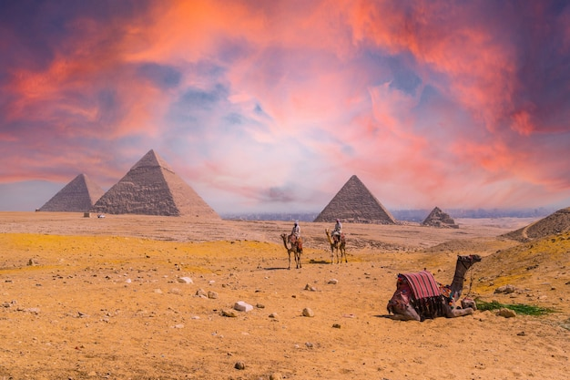Cairo, egypt; october 2020: a seated camel and men on camels in the background at the pyramids of giza, the oldest funerary monument in the world