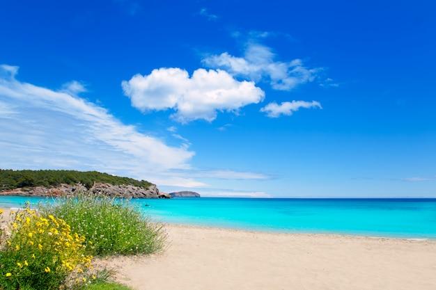 Cala nova beach in ibiza island with turquoise water
