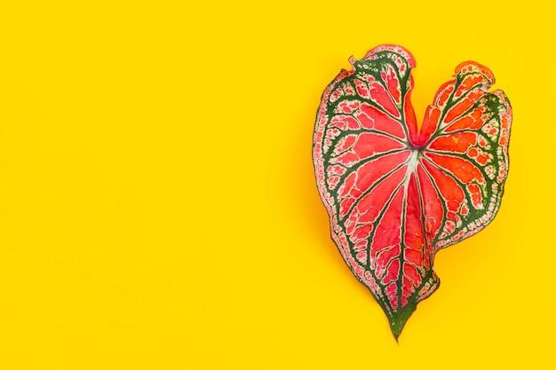黄色の背景にニシキイモの葉。コピースペース