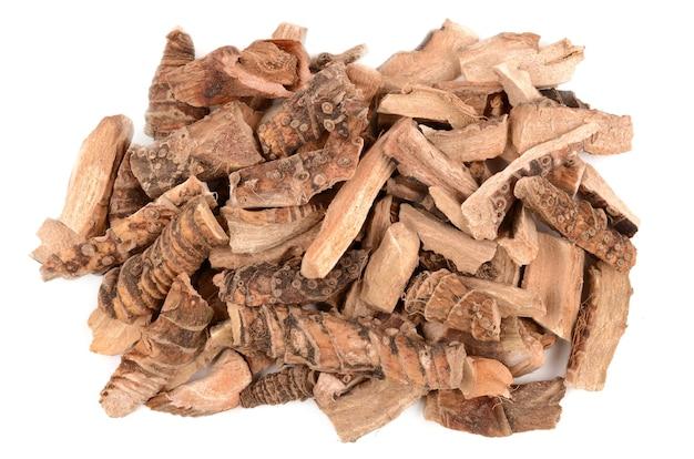 Calamus 뿌리