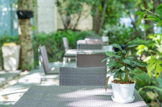 テーブルの上の屋内装飾のためのカラテアシルバースター、選択的な焦点