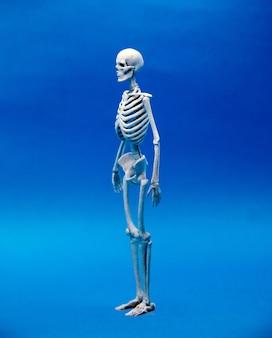 Calcium human bone on blur color background