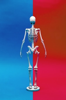 Calcium human bone on difference color background Premium Photo