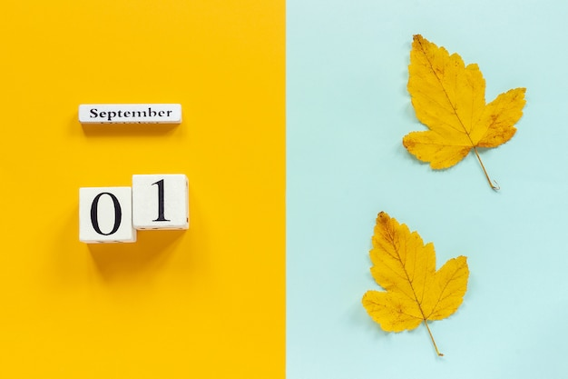 Calendar september 1 and yellow autumn leaves on yellow blue