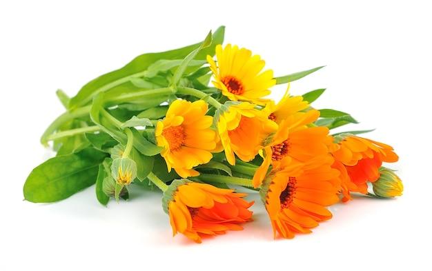 Календула букет цветов на белом фоне