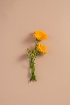 미니멀한 평면 정물에 있는 금송화 꽃 금잔화 오렌지 꽃 평면도