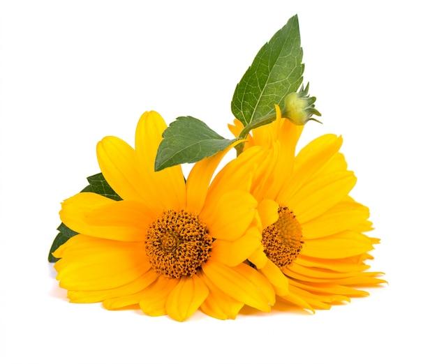 금 송 화 꽃 절연 금 잔 화 꽃 약초입니다.