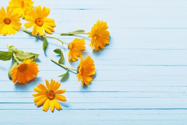 파란 나무 배경에 금 송 화 꽃