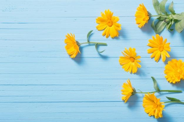 푸른 나무 테이블에 금 송 화 꽃