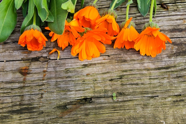 Calendula flowers on the wooden background