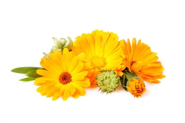금송화, 약용 식물, 흰색으로 격리된 잎과 씨앗이 있는 꽃
