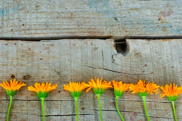 Calendula officinalis on the wooden background