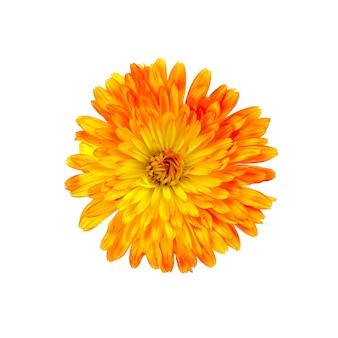 금 송 화 오렌지 노란색 테리 절연