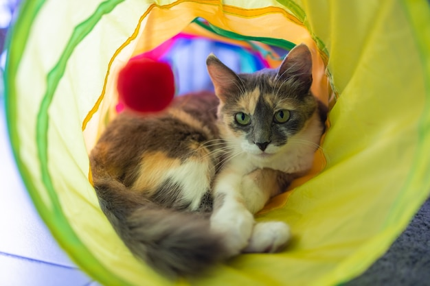Calico cat framed and alert in cat tunnel toy