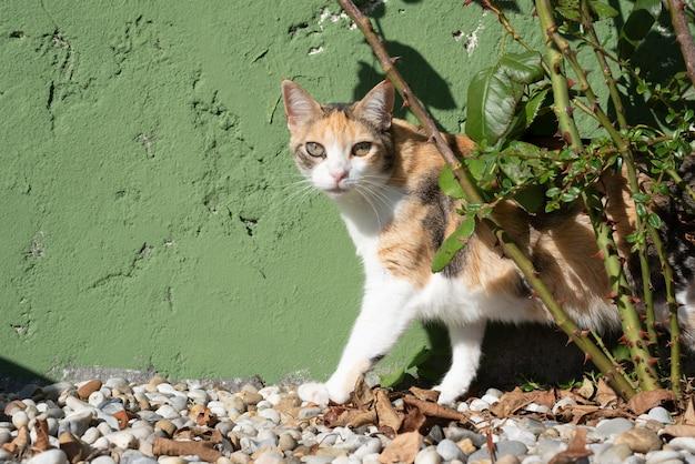 裏庭の茂みの近くの三毛猫ねこネコがカメラを見る