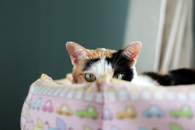 A calico cat staring at the camera.