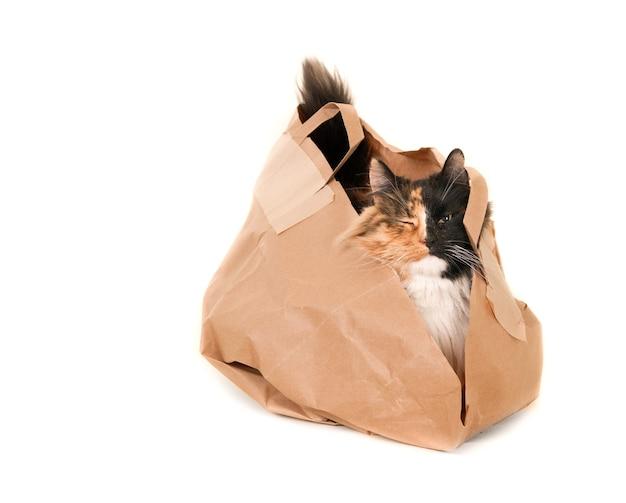 片目を紙袋に入れて閉じた三毛猫。