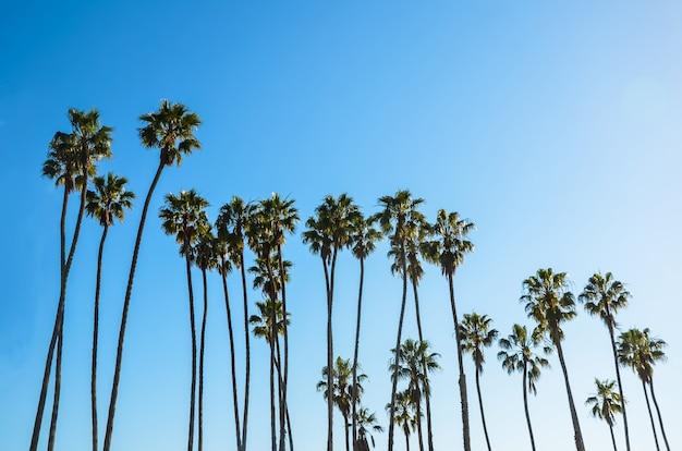 California high palms on the blue sky