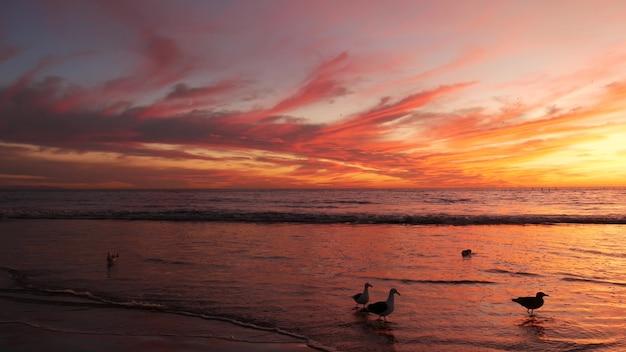 カリフォルニアの夏のビーチの美的夕日。太平洋の波。米国ロサンゼルスのサンタモニカ。