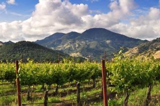 Calistoga виноградник