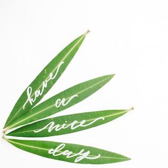 Каллиграфические слова «хорошего дня», написанные на зеленых листьях
