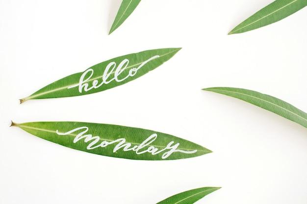 녹색 잎에 쓰여진 붓글씨 단어