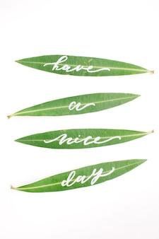 녹색 잎에 붓글씨 단어