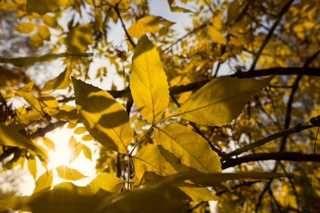 가을 시즌에는 나무의 황변 된 단풍, 9 월 초 가을에는 따뜻하고 화창한 날씨로 평온한 가을 자연.
