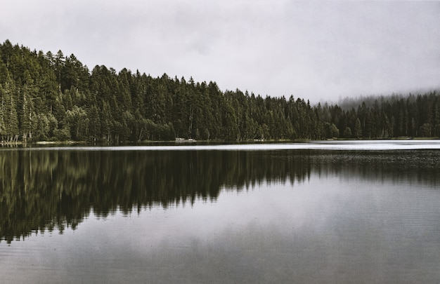 Calm body of water beside forest