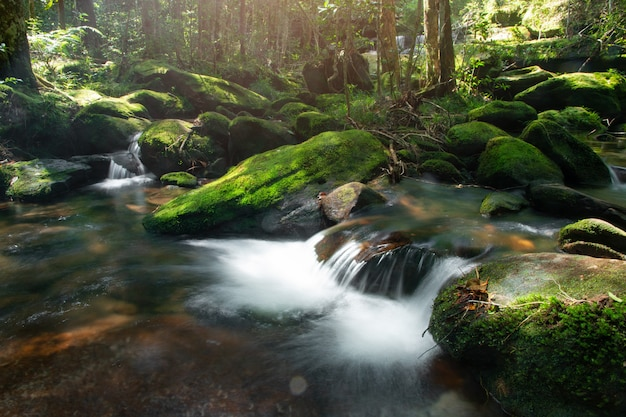 Calm mountain water stream flowing in green forest