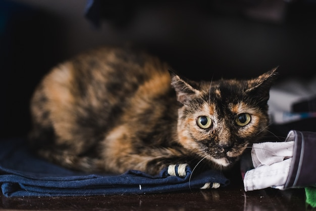 Calm pet cats, resting in a house with unfocused background.
