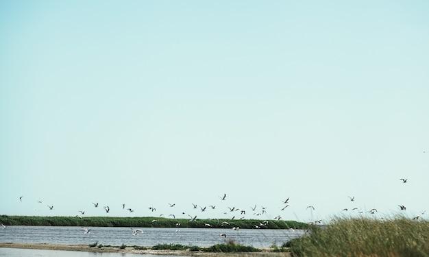 カモメが飛ぶ穏やかな海湾