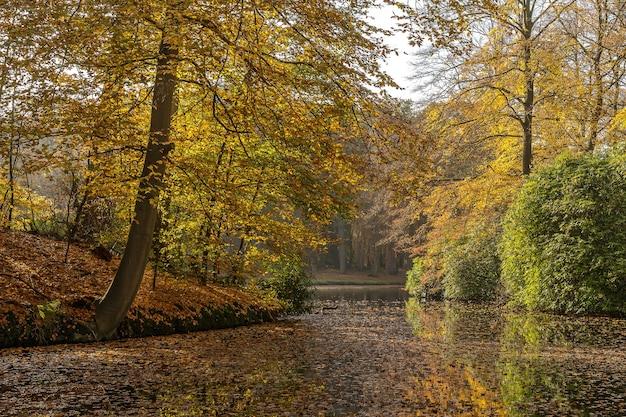 Vista rilassante su un lago circondato da un terreno ricco di alberi ed erba