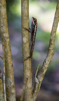 木の枝のクローズアップのカロテスエマ