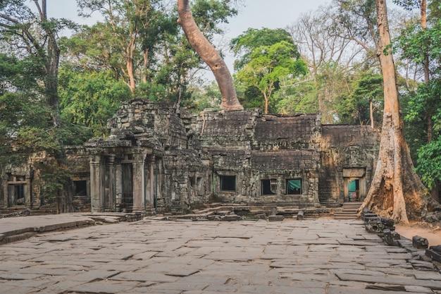 Cambodia angkor wat ta prohm temple