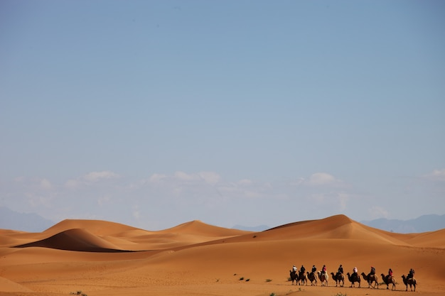 Carovana di cammelli in un deserto nello xinjiang, cina