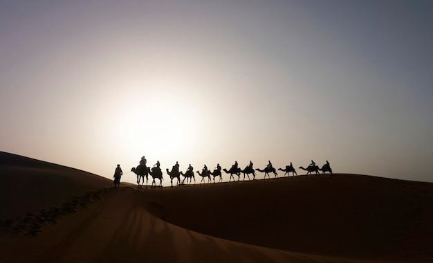 Carovana di cammelli sulla duna di erg chebbi in marocco