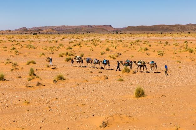 Camel caravan going through the sahara desert.