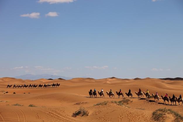 중국 신장의 사막에 있는 낙타 캐러밴