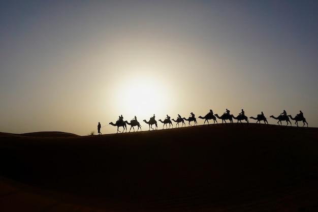 Караван верблюдов на дюне эрг шебби в марокко
