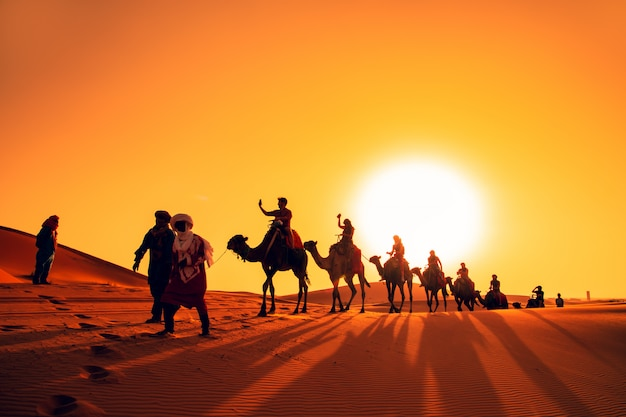 Camel caravan at sunset in the sahara desert.